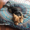 Square Elephant Mandala Floor Pillow Indian Cushion Cover Floor Pillow Sham Ottoman Floor Pouf Oversized Sofa Large Dog Bed 35″X35″