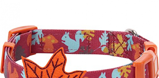 Blueberry Pet 4 Patterns Fall Fun Enchanting Squirrel Designer Dog Collar with Maple, Small, Neck 12″-16″, Adjustable Collars for Dogs