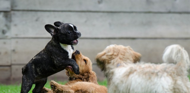 9 Tips On How To Train Your Dog